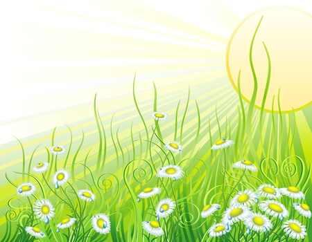 Sunny meadow with flowers Illustration