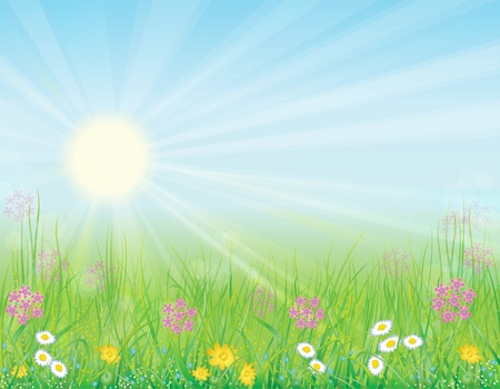 Bright, natural background with the fresh grass and wild flowers Stock Photo