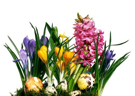Naturale fiori di primavera croco, narcisi, giacinti e uova di Pasqua