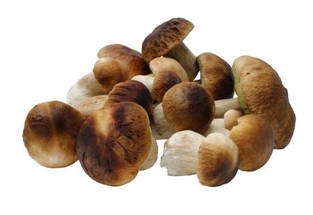 Funghi freschi (Boletus edulis) isolato su sfondo bianco