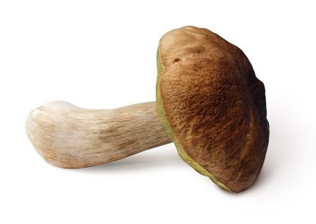 Un fungo fresco (boletus edulis) su sfondo bianco