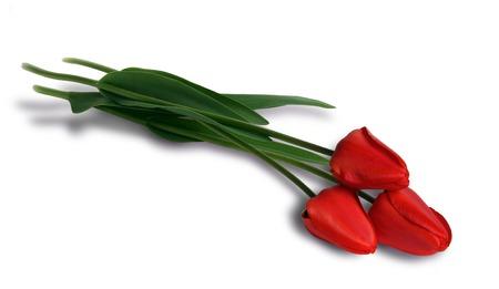 Tre tulipani rossi su fondo bianco Archivio Fotografico