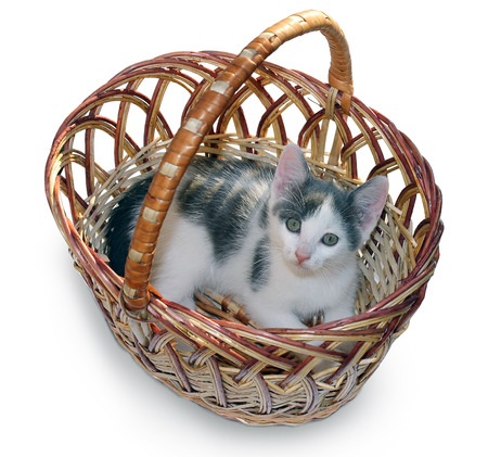 Small white and gray kitten lying in a basket