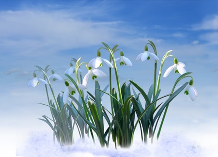 early spring snow: White snowdrops on blue sky background Stock Photo
