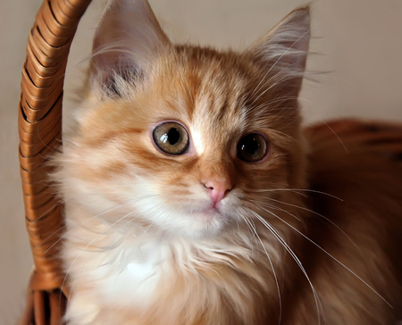 Small cute red kitten sit in a basket Stock Photo