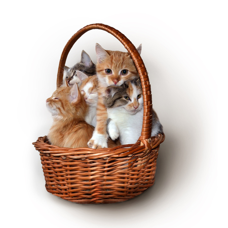 Five small cute colorful kittens sit in a basket Stock Photo - 77310331