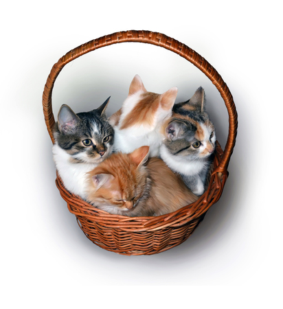 Four small cute colorful kittens sit in a basket