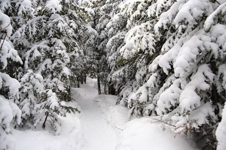 snowshoes: winter forest walking path used for snowshoes near Baie Saint-Paul, Quebec, Canada Stock Photo