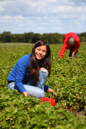 Beautiful woman eating a strawberry while picking strawberries on a farm in Denmark. photo