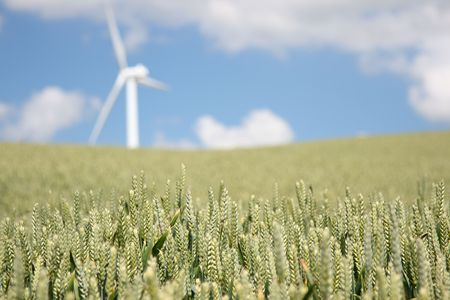 The Concept is sustainable future: Green energy and organic food. Closeup of wheat field in Denmark. Windturbine in the background. Shallow depth of field with focus on the wheat in the foreground. Stock Photo - 5149920