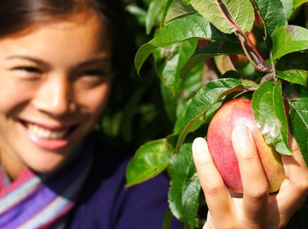 apple trees: Autumn woman picking apple from tree. Shallow depth of field, focus on the apple. Stock Photo