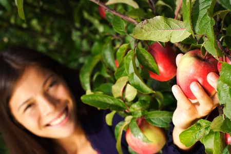 picking hand: Autumn woman picking apple from tree. Shallow depth of field, focus on the apple. Stock Photo