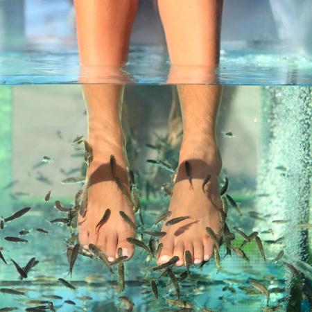 pedicure: Spa pesce piedi pedicure trattamento di cura della pelle con il pesce Garra Rufa, chiamato anche pesce dottore, pesce e pesce kangal sgranocchiare.
