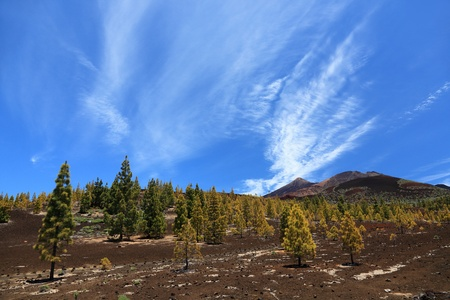 Tenerife, Teide landscape Stock Photo - 9981705