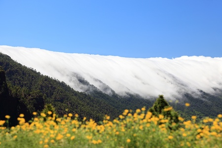 phenomena: La Palma, Canary Islands. Photo shows the rare and famous cloud phenomena where the clouds fall down over the mountain ridge Cumbre Nueva like a waterfall. Stock Photo