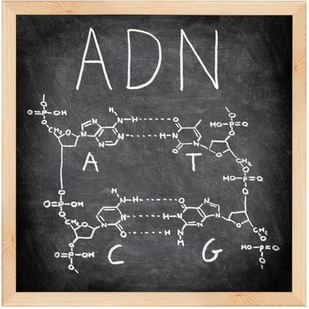 Y, ADN en español, francés y portugués, escrito en la pizarra con tiza. Estructura química de ADN, incluyendo las cuatro bases. Pizarra ciencia y el concepto de la educación.