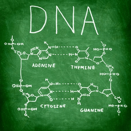 adenine: DNA chemical structure on chalkboard showing the four bases of DNA