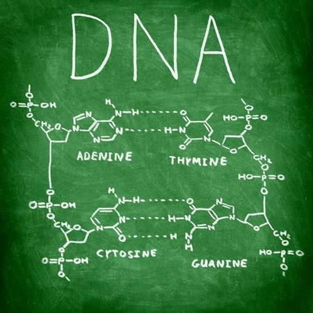 genetica: DNA struttura chimica sulla lavagna mostra le quattro basi di DNA Archivio Fotografico