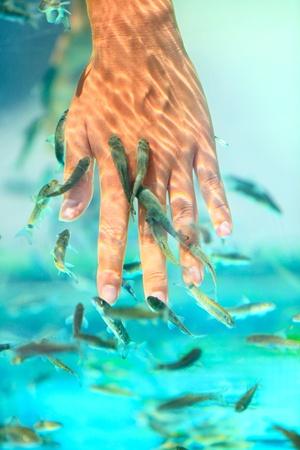 female nipple: Manicure pesce spa trattamento di bellezza. Mano e il trattamento della pelle delle dita cura in acqua con i pesci Garra Rufa, pesci dottore chiamato anche, pesce e pesce kangal sgranocchiare. Primo piano.