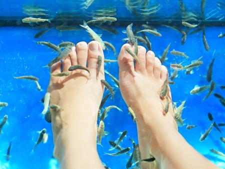 rufa: Fish spa pedicure  Rufa Garra fish spa pedicure massage treatment  Closeup of feet and fish in blue water  Female feet  Stock Photo
