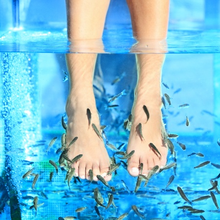 garra: Fish Spa pedicure - Rufa Garra pedicure treatment. Closeup of woman enjoying skin care fish spa beauty treatment.