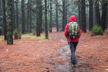 walking in the rain: Hiking in rain. Hiker walking on pine forest path on rainy day wearing raincoat Stock Photo