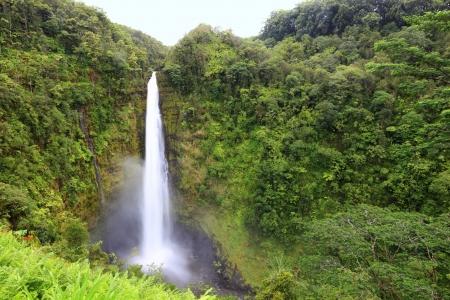 Waterfall - Akaka falls Hawaii, Big Island  Famous Hawaiian waterfall in slow exposure and good detail Stock Photo - 17079248
