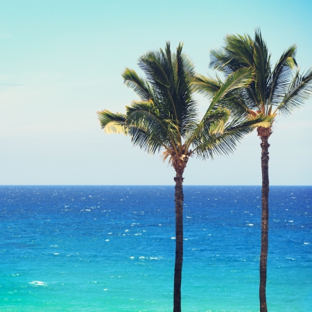 Blue beach ocean palm trees background. Tropical travel concept with deep turquoise blue sea and copy space. From Hawaii. Stock Photo - 19238096