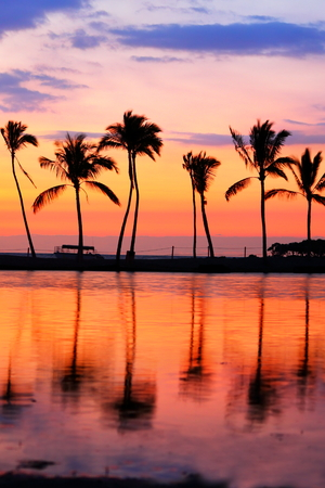 Paradise Beach Sunset With Tropical Palm Trees Summer Travel Holidays Vacation Getaway Colorful Concept Photo