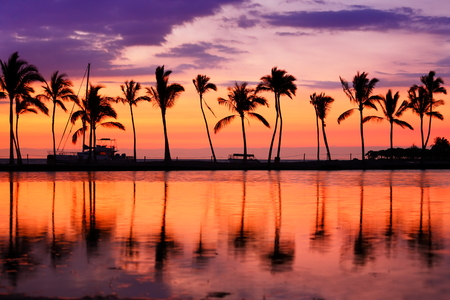 hawaii sunset: Paradise beach sunset landscape with tropical palm trees silhouettes. Summer travel holidays vacation getaway colorful concept photo from sea ocean water at Hawaiian beach, Big Island, Hawaii, USA.