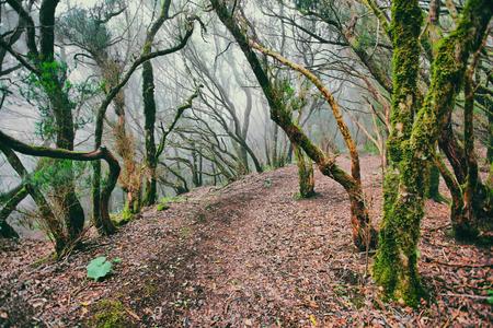 木々の上に霧と緑豊かな苔と神秘的な古代の森の背景。熱帯の荒野の自然の風景。ヨーロッパ旅行。 写真素材