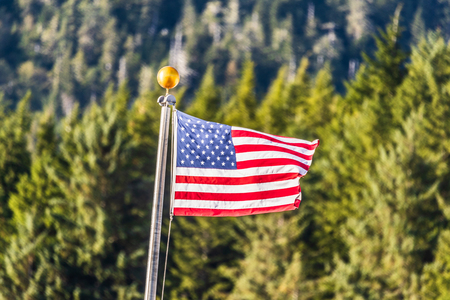 USA flag waving on forest outdoor background. American symbol. Stock Photo