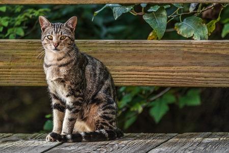 Katze draußen - Hauskatze oder Straßenkatze, wilde Katzen im Freien. Standard-Bild