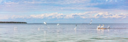 Bird refuge wildlife background panorama banner of nature landscape ocean birds in Key West, Florida. Animals of the USA.