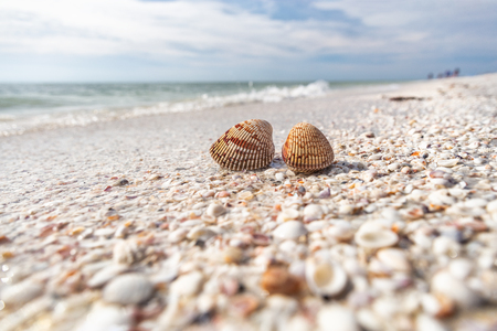 Seashells shelling activity on shell beach in Sanibel, Fort Myers , Southwest Florida coast, USA travel.