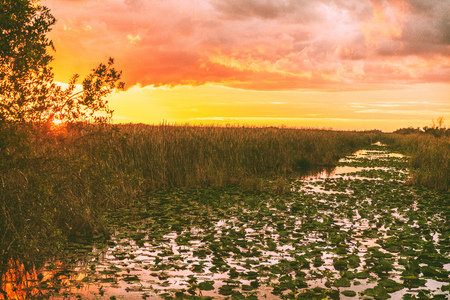 Everglades Florida wetland, Airboat excursion tour at Everglades National Park at sunset. Nature landscape. USA destination for tourism.