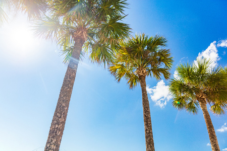Summer vacation sunny background beach holiday palm trees with sun flare sunshine through the leaves of tree. Blue sky looking up landscape.