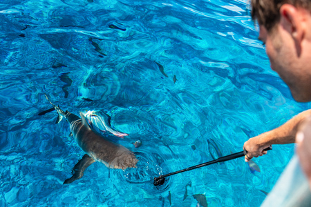 Shark boat tour tourist man filming recording with go pro underwater in blue lagoon ocean in Tuamotu Archipelago, Tuamotus islands, French Polynesia. Reklamní fotografie - 122804521