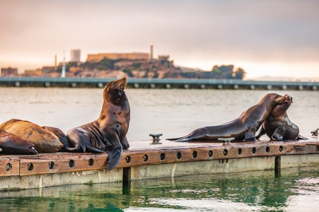 Alcatraz San Francisco bay harbor view of sea lions by the pier. Scenic view of popular tourist attraction in west coast, California, USA. Reklamní fotografie