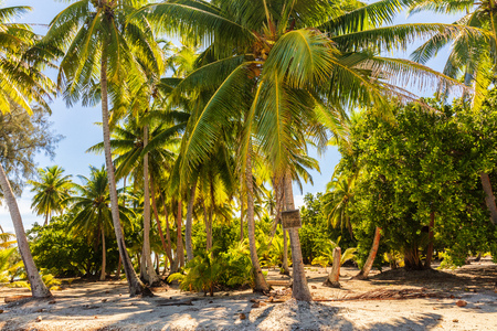 Palm trees on beach island getaway lush tropical background. Exotic travel destination.