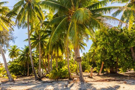 Palmbomen op strand eiland uitje weelderige tropische achtergrond. Exotische reisbestemming.
