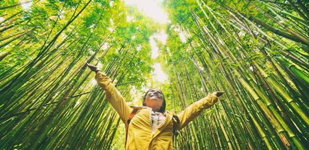 Duurzame milieuvriendelijke reizende toeristische wandelaar wandelen in natuurlijk bamboebos blij met armen in de lucht genietend van een gezonde omgeving, hernieuwbare bronnen. Stockfoto