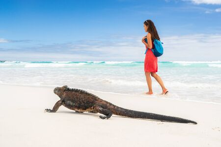 Galapagos wildlife marine iguana walking on Tortuga Bay beach in Santa Cruz island with tourist woman in background. Galapagos islands travel vacation. Фото со стока