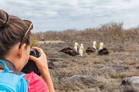 Galapagos tourist taking pictures of Waved Albatross on Espanola Island, The Galapagos Islands. Wildlife photographer and ornithologist photographing the Galapagos Albatross.