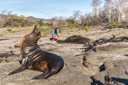 Galapagos Sea Lion and marine iguanas and wildlife nature photographer tourist on Galapagos Islands taking photo on Galapagos adventure travel, Puerto Egas (Egas port) Santiago island, Ecuador