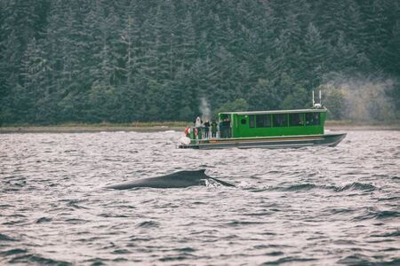 Alaska whale watching tour activity as cruise ship excursion popular tourist attraction in Juneau, USA. Summer Autumn travel destination. Dorsal fin of humpback whale diving in sea. Banco de Imagens