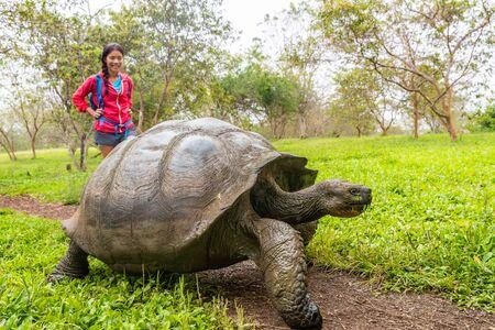 Galapagos-Riesenschildkröte und Frau Tourist auf der Insel Santa Cruz auf den Galapagos-Inseln. Tiere, Natur und Tierwelt Foto Nahaufnahme von Schildkröte im Hochland von Galapagos, Ecuador, Südamerika.