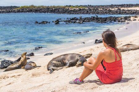 Galapagos tourist enjoying wildlife in nature looking sitting by many Galapagos Sea Lions on cruise ship adventure travel holidays vacation, Mann Beach (Playa Mann), San Cristobal, Galapagos, Ecuador.
