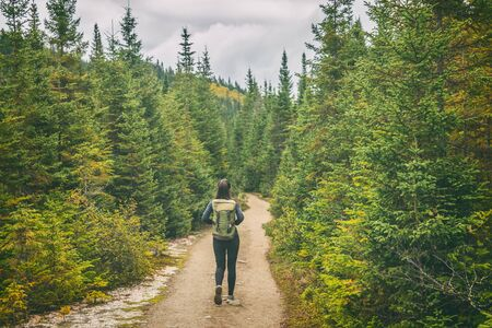 Hiker travel woman walking on trail hike path in forest of pine trees. Canada travel adventure girl tourist trekking in outdoors nature.