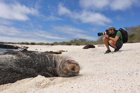 Galapagos Animal wildlife nature photographer tourist photographing Galapagos Sea Lion in sand lying on beach on Gardner Bay Beach, Espanola Island, Galapagos Islands, Ecuador, South America. Imagens